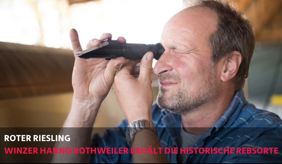 bergstrasse_roter riesling_Roter-Riesling_HannoRothweiler_Winzer