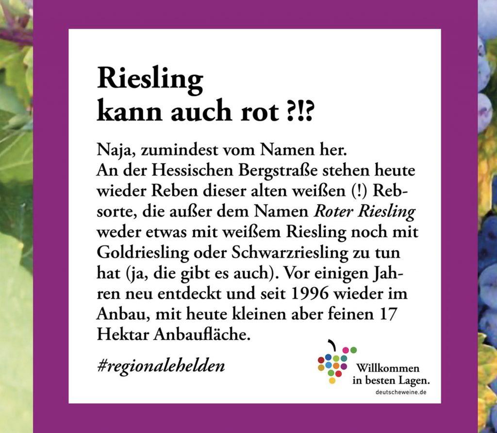 bergstrasse_roter riesling_DWI-Themenwochen_2020